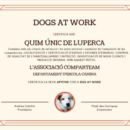 los beneficios de tener un perro en la oficina